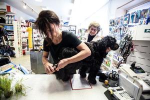 Sonya Forsbergs tibetanska terrier Terri får sina klor klippta av Lotta Haglund.