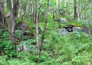 Jordkällare nära dansbanan, som haft ett hus ovanför.  Foto: Bengt Agemark