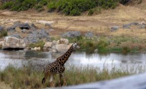 Från sin bungalow i Sydafrika hade Margareta och Åke utsikt över Olifant River och djuren som passerade.