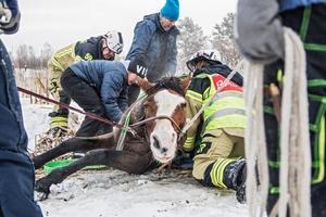 Räddningstjänsten hade stor hjälp från de som äger stallet som Smilla är inhyst i, när de skulle dra upp hästen.