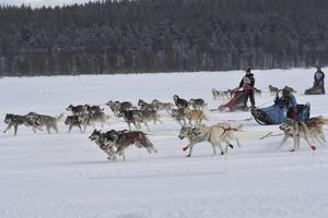 Starten vid Polardistans 2019.