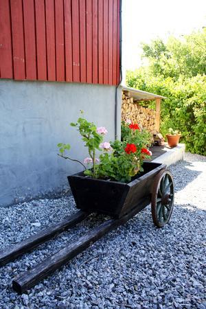Pelargoner i en gammal vagn.