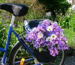 Cykeln lastad med bidrag till midsommarstången