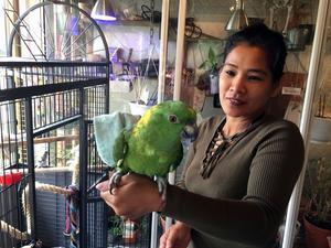Vad ska hända med Puma? Phenmani Hedberg  i Härnösand får inte behålla sin papegoja.