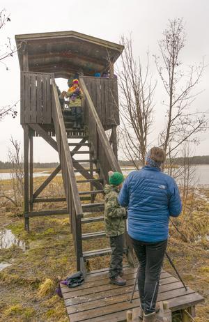 Fågelskådare i alla åldrar mötte upp vid Ändsjön. Foto: Ingvar Alkemar