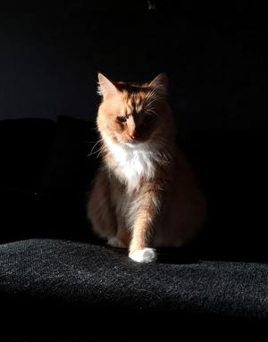 Katten Link. Foto: Linda Kristoffersson