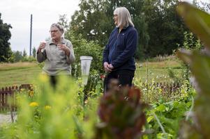 Kristina Persson och Kerstin Thelberg har jobbat hårt med trädgården i sommar.