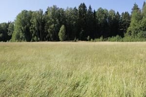En hektar oslagen vall i Västerbo har nu blivit omhändertaget.