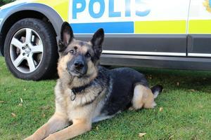Polishunden Diezel kan se fram emot att bli bortskämd som civilhund. Foto: privat