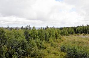 Skog - en förutsättning för livet i norr och för Daniel Waluszewskis historiska berättelse.