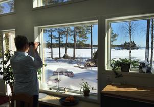 I den gamla stugan satt det bara små fönster, men de nya panoramafönstren inbjuder till flera timmars spaning per dag.