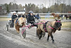 Lovisa Söderström och shettisen Ibra samlar ihop resten av ponnygänget i defileringsvolten på Dannero.