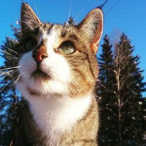 411) Tusse är en supersnäll hankatt som älskar att bli bortskämd. Barnen är hans favoriter Foto: Ella Grabein Åhs