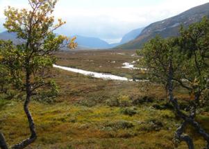 Forskare vid SMHI ska försöka kartlägga hur den biologiska mångfalden i Jämtlandsfjällen påverkas av klimatkrisen.  Foto: Alexandra Westerlund Karlsson.