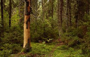 Weda skog får känga av Naturskyddsföreningen. Foto: Hasse Holmberg