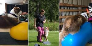 Ida Gustavsson anordnar kurser i pilates för hundar vilket är en träningsform för hunden som inkluderar en balansboll eller en balansdyna.