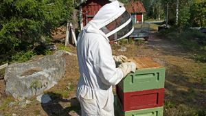 Här står han vid en av bikuporna. Under locken gömmer sig stora bisamhällen. Panelerna består av vax och är formade i sexkantiga celler. Bikupan är fylld med honung och ägg.
