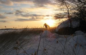 En fin skidtur från Tidö-Lindö mot Tärnö-ö lördag 23 januari 2010