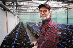 """I växthusen på sammanlagt 4500 kvadratmeter  går det åt uppemot 25 kubikmeter vatten per dygn under sommaren. """"En gurk- eller tomatplanta behöver drygt tre liter vatten om dagen"""", säger Janne Bohlin, här vid ett gäng paprikaplantor. Bakom honom ett bord med 4000 penséer."""
