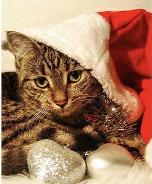 Bilden föreställer Tiger. Världens gosigaste och knäppaste katt, som dock för det mesta tror att hon är en hund. Bild: Sofia