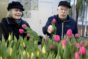 Margareta och Bengt Andersson älskar tulpaner och passade på att plocka en ordentlig bukett.