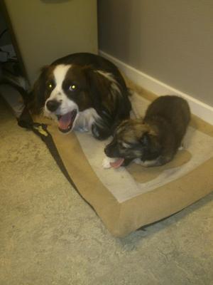 Även hundar blir trötta av höst mörkret. Det märkte jag när jag tog detta kort på mina