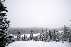 Skuleskogen i vinterskrud.
