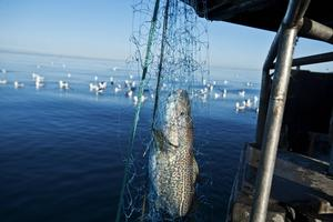 Om vi ska ha några fiskebåtar i våra kustsamhällen måste de förstås få ersättning för det påtvingade stilleståndet, skriver Andrea Kronvall, Gabriel Kroon och Karl-Göran Edberg.