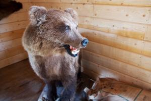 Många uppstoppade björnar finns i baren.