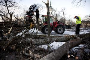 Stadsparken i Härnösand drabbades hårt av stormen. Under hela fredagen pågick uppröjningsarbeten