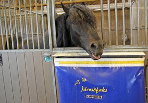 Bland personalen i stallet i Hudiksvall går Järvsöfaks under namnet