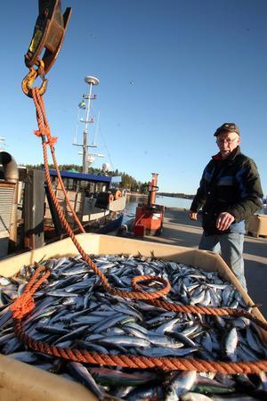 Björn Larsson slutade som yrkesfiskare i början av 1980-talet. Han är ofta nere i hamnen och hjälper till när trålarna lägger till.