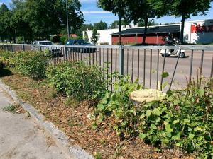 Enligt polisanmälan fälldes 13 av lindarna i juni i år, och de andra tre togs ned hösten 2014.