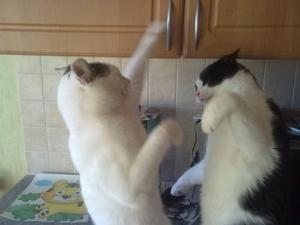 Boxningsmatch mellan Bose o Sune i  köket innan matdags.