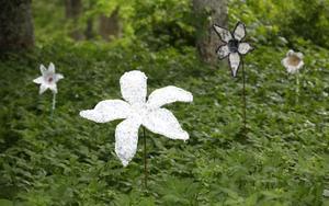 Det blommar, av gamla plastkassar, på Anna Nyberg Pudelzons äng.