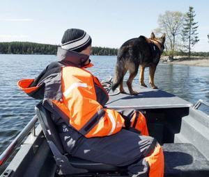 Kriminalsökhunden Fox med matte Madelene Lind under övningar på Storsjön i går.