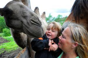 By Slånkvicku handlar mycket om möten, förra året möttes kamelen Kashmir och lilla Vinnie Hedén