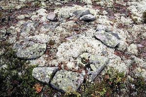 Risken är att okända fornminnen i skogen skadas när skogsbolagen markbereder, skriver insändaren.