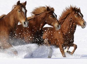 Hästen har en framträdande roll i Lin Hallbergs