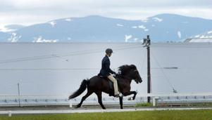 Snyggt ekipage. Hans Nordin på Arvakur under NM för islandshästar i Wången i helgen.
