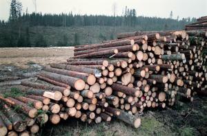 Maciej Zaremba skildrar skogsbruket och förvandlingen från skog till virkesåker. Han berättar om den oheliga alliansen mellan skogsbolag och myndigheter och människors fåfängliga kamp mot kalhyggen ända in på knuten. Foto: Fredrik Persson