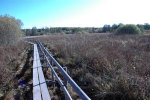 RENING. Vid spången mot Gillberga nedanför Vallskogaområdet breder våtmarken ut sig. Kommunen vill nu använda våtmarken för att ta bort näringsämnen innan dagvattnet och det renade vattnet från reningsverket når Tämnarån.