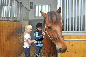 HÄSTVÅRD. Louise Baumgartner-Björkström, 6 år och Lova Wärn, 7 år, ryktar hästen Albin i boxen.