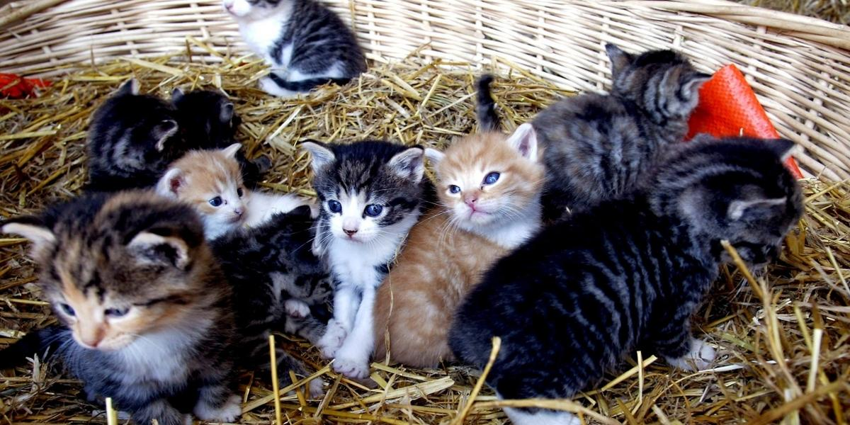 sex kattunge vuxen