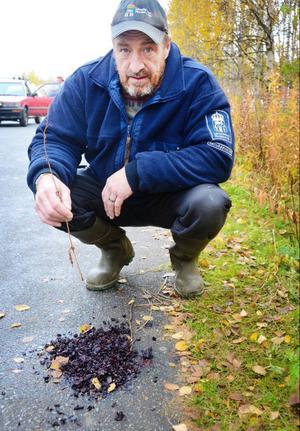 Håkan Berglund, naturbevakare på Länsstyrelsen, har konstaterat att det ligger björnspillning inne i Gäddede.