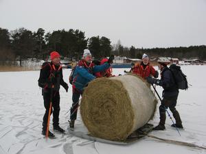 En grupp i föreningen LiV åkte skridsko runt Ängsö lördag 22 januari. Vid Långholmens brygga hade en bonde/djurhållare börjat vinscha en höbal på isen över Skurusundet till Långholmen. Som släde användes en upp-och nedvänd motorhuv. Balen ville rulla av, men vi kunde hjälpa till. Vi kom på att vi skulle vända på balen så att den låg kvar på
