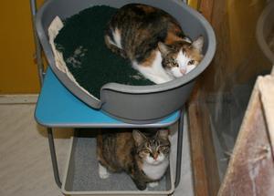 De här två katterna hade lämnats på trappan utanför katthemmet Spinnhuset. På katternas bur satt en lapp med ordet