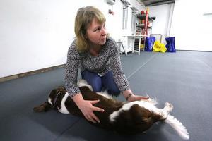 Ulrika Erhardsson från Garphyttan provar att stretcha bakbenen på sin  welsh springer spaniel Aslan.