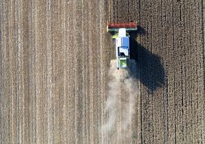 God odlingsmark försvinner när det byggs vägar, bostäder och annat där vi borde ha produktion för att klara vår egen livsmedelsförsörjning, skriver debattören. Foto: TT
