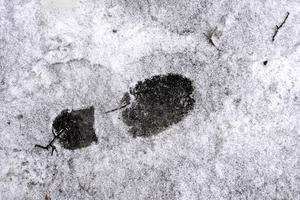 Främst kommer snön att falla i de norra länsdelarna. Foto: Janerik Henriksson / TT